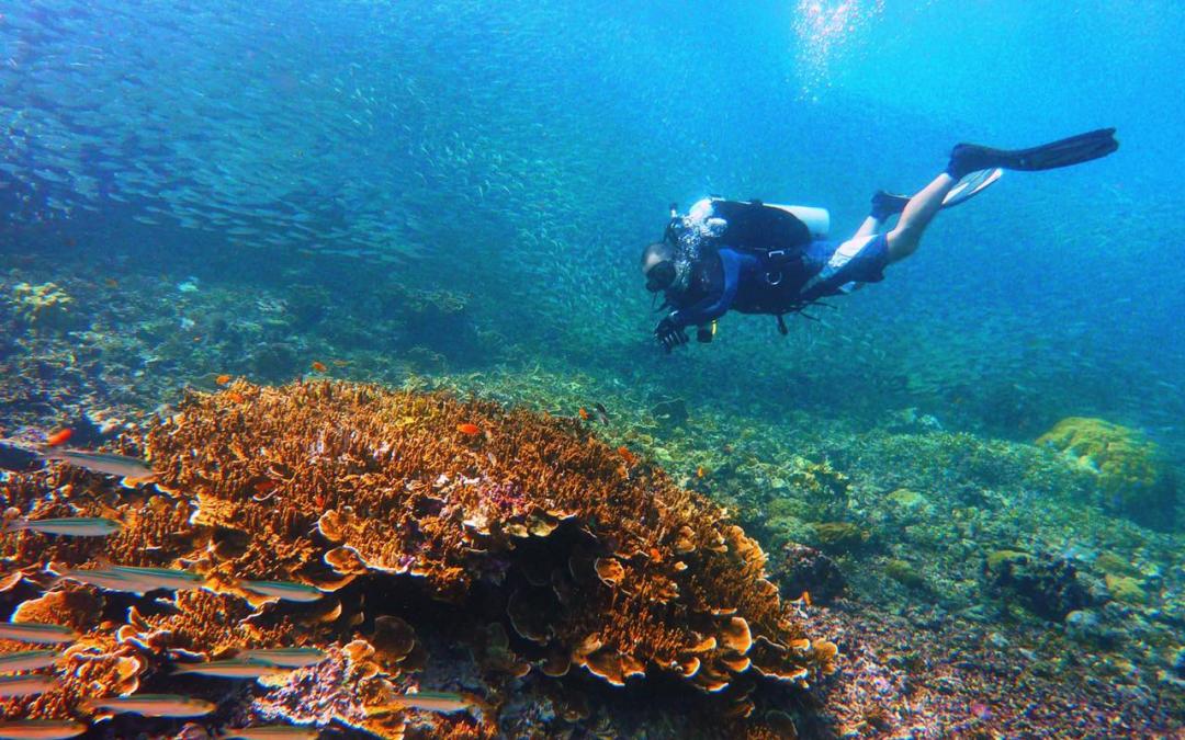 DOT celebrates PHL's Leading Dive Destination citation