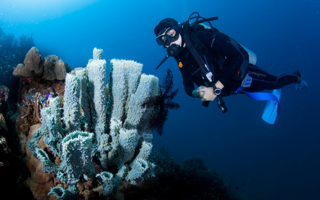 Philippines bags best overseas diving award 2020