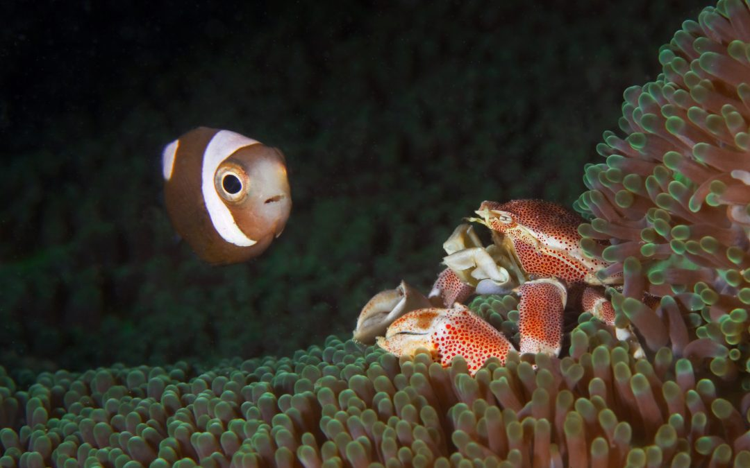 """DOT celebrates """"Surprisingly Spectacular Diving"""" tag of 3 Phl dive sites by Lonely Planet"""