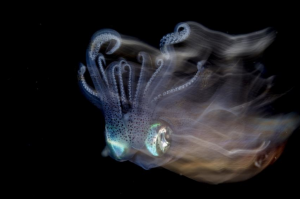 Cephalopod, taken by Lilian Koh from Singapore