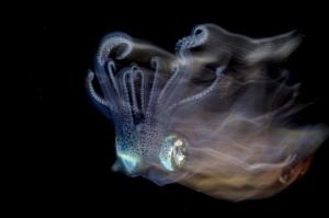 Cephalopod, taken by Lilian Koh from Singapore