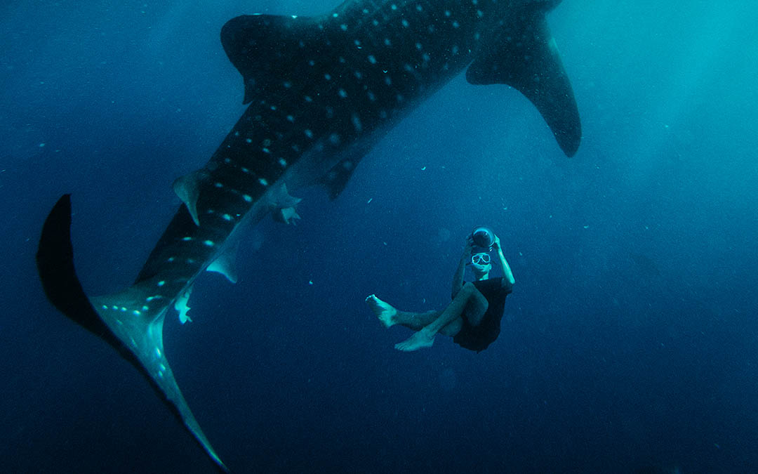 Whale Shark Oslob, Cebu