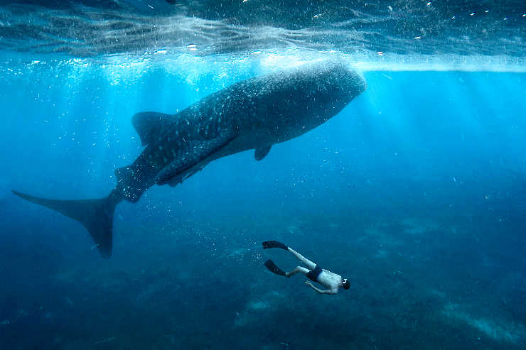 TTG Feature: Diving into the Philippines' idyllic natural beauty and wildlife experiences